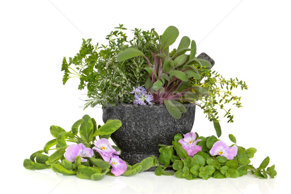 Herb Leaf and Flower Selection Stock photo © marilyna