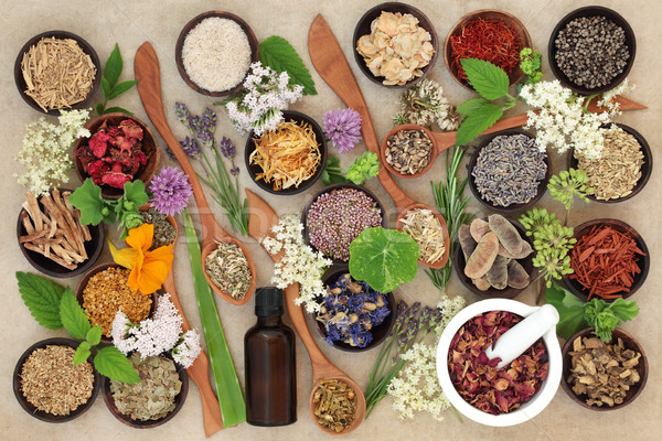 Natural Healing Herbs and Flowers Stock photo © marilyna