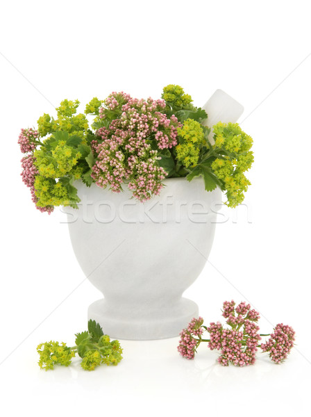 Valerian and Ladys Mantle Herbs Stock photo © marilyna