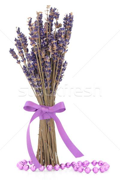 Stock photo: Lavender Herb Flowers