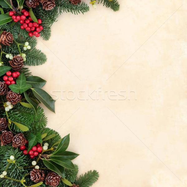 Winter Greenery Border Stock photo © marilyna