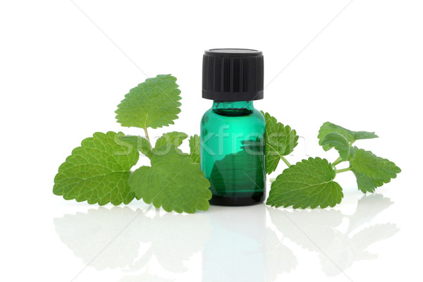 Lemon Balm Herb Essence Stock photo © marilyna