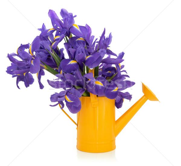 írisz virágok lila virág egyezség citromsárga Stock fotó © marilyna