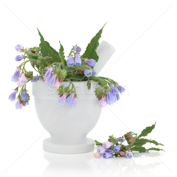 Comfrey Herb Flowers Stock photo © marilyna