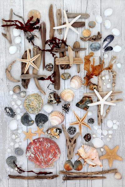 Stockfoto: Abstract · strand · kunst · drijfhout · schelpen