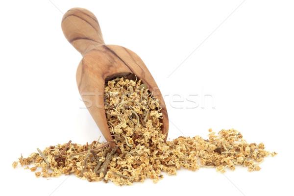 Elderflower Herb  Stock photo © marilyna