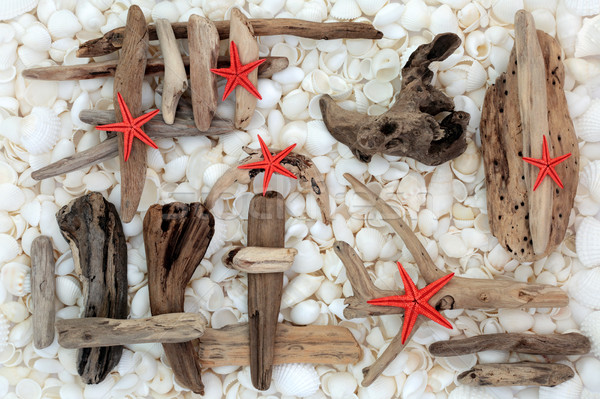 Zeester drijfhout schelpen Rood abstract Stockfoto © marilyna
