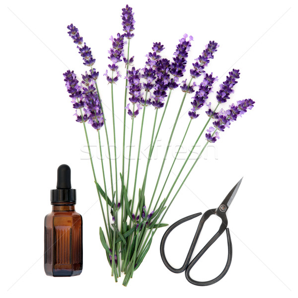 Lavanda erva essência flor aromaterapia Foto stock © marilyna