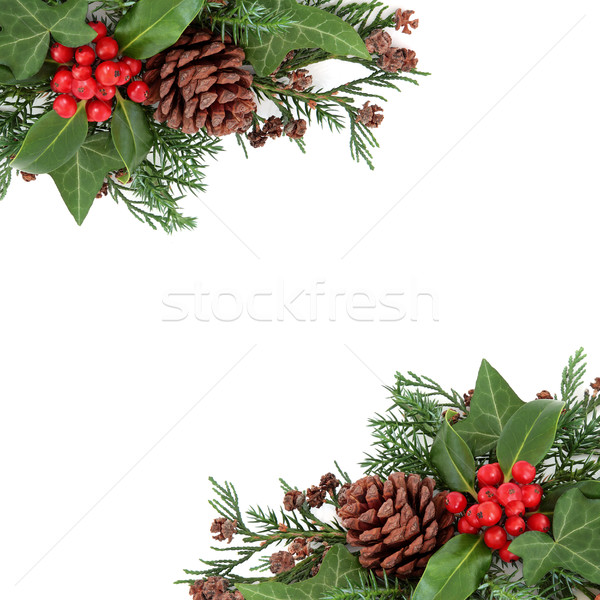 Winter Holly and Flora Border Stock photo © marilyna
