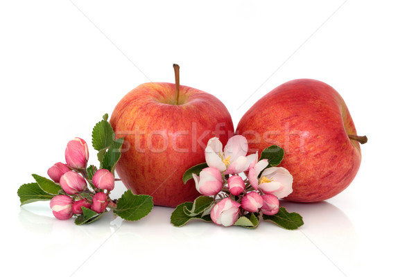 Apple Fruit with Blossom Stock photo © marilyna