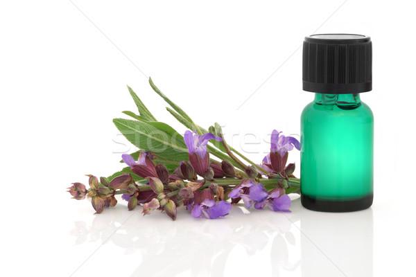 Salvia erbe essenza fiore foglia aromaterapia Foto d'archivio © marilyna