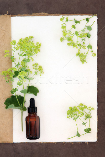 Ladys Mantle Herb  Stock photo © marilyna