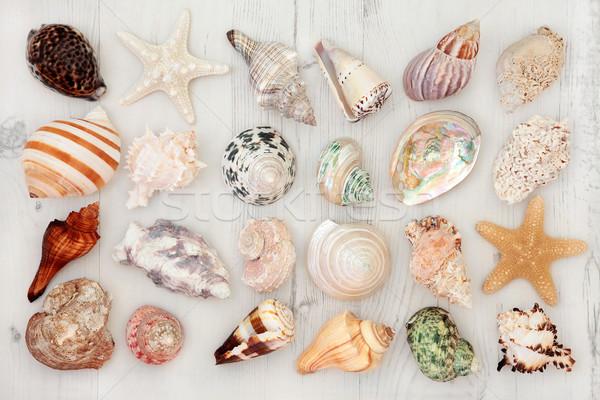 Seashells Stock photo © marilyna