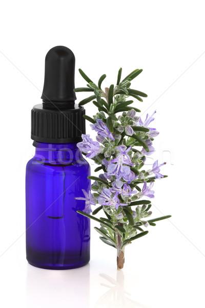 Rozmaring gyógynövény lényeg levél virág aromaterápia Stock fotó © marilyna