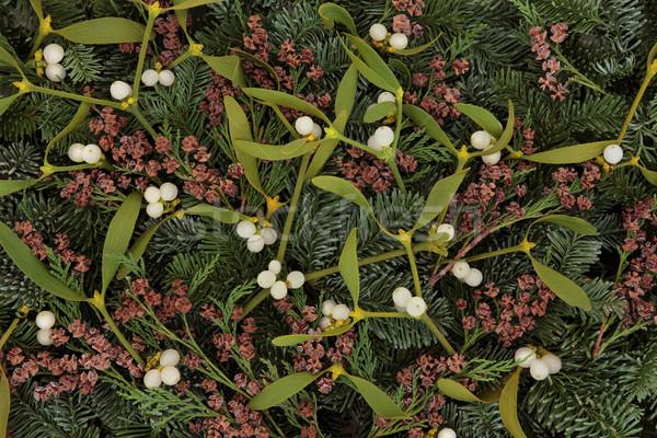 Mistletoe and Winter Greenery Stock photo © marilyna
