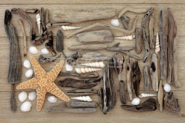 Powłoki driftwood kolaż Rozgwiazda morza dąb Zdjęcia stock © marilyna