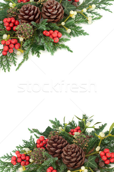 Natural Winter Background Border Stock photo © marilyna