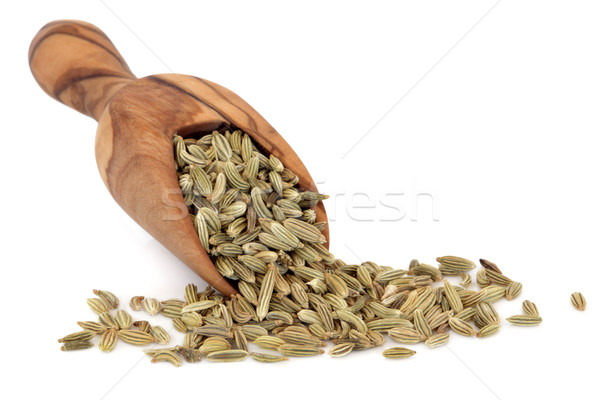 Fennel Seed Stock photo © marilyna