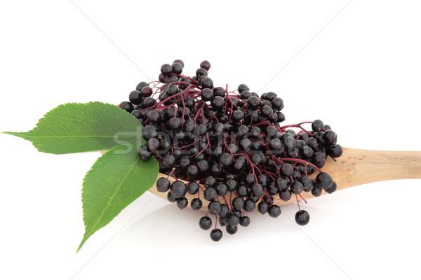 Elderberry Fruit Stock photo © marilyna