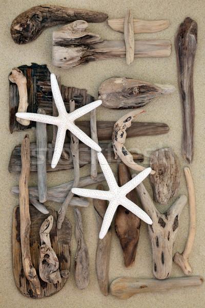 Starfish troncos abstrato areia praia textura Foto stock © marilyna