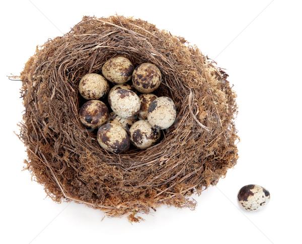 卵 卵 クラッチ 自然 鳥の巣 1 ストックフォト © marilyna