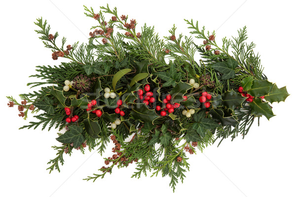Holly, Ivy, Mistletoe and Cedar Leaves Stock photo © marilyna
