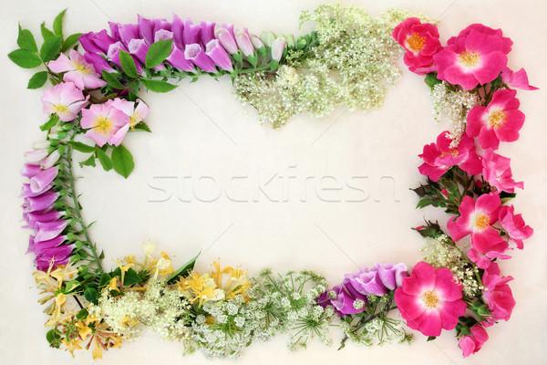 диких цветов границе английский цветы используемый природного Сток-фото © marilyna