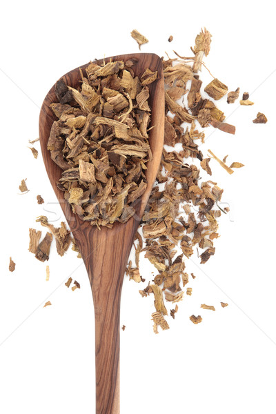 Yellow Dock Root Stock photo © marilyna