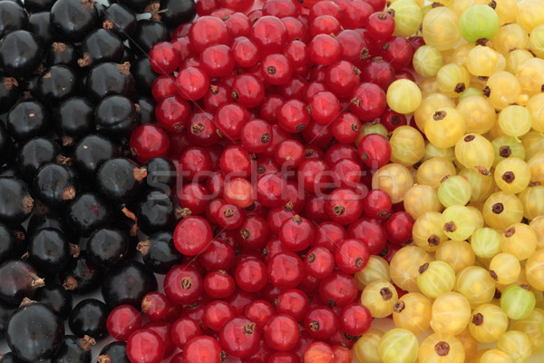 Black, Red and White Currants Stock photo © marilyna