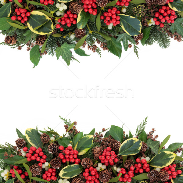 Christmas Holly Border Stock photo © marilyna