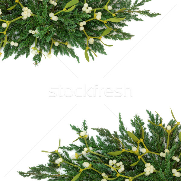 Mistletoe and Juniper Border Stock photo © marilyna
