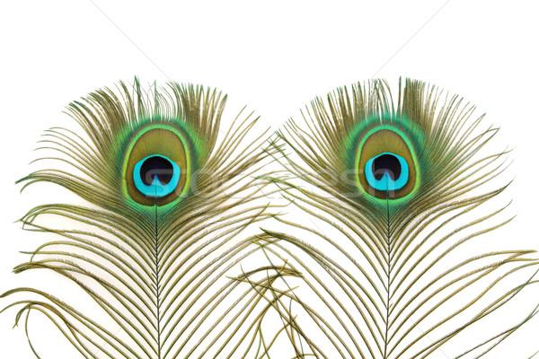 Paon yeux plumes résumé blanche nature Photo stock © marilyna