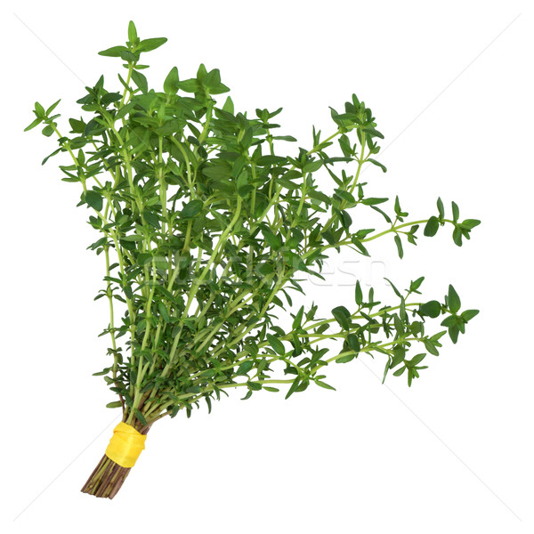 Thyme Herb Posy Stock photo © marilyna