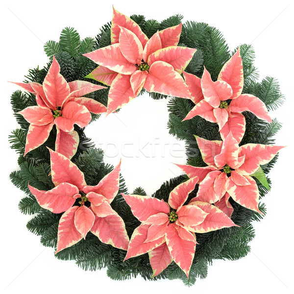 Pink Poinsettia Wreath Stock photo © marilyna
