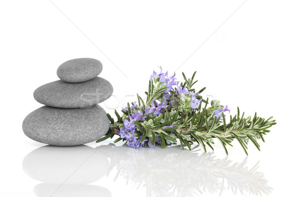 Rosemary Herbal Therapy Stock photo © marilyna