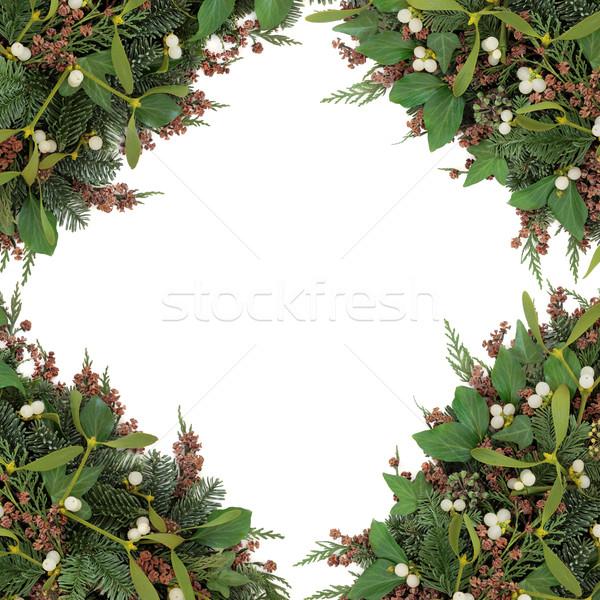 Fagyöngy szépség keret tél növényzet borostyán Stock fotó © marilyna