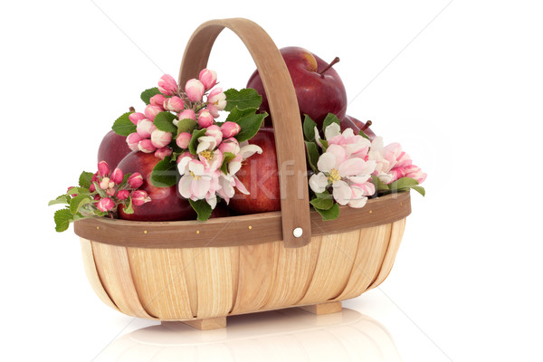 Apple Flower Blossom Stock photo © marilyna