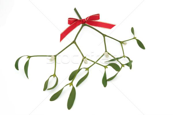 ストックフォト: ヤドリギ · 液果類 · 赤 · 弓 · 孤立した · 白