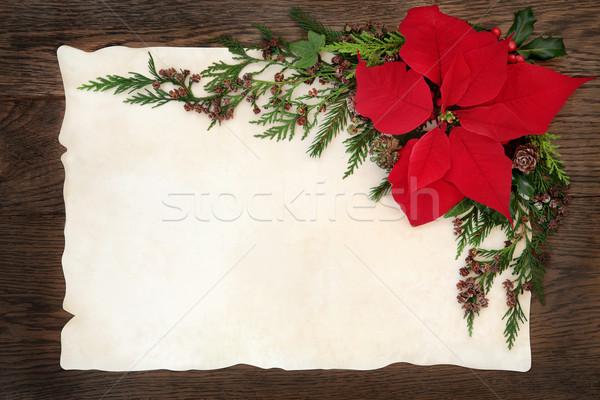 Stock photo: Poinsettia Flower Border