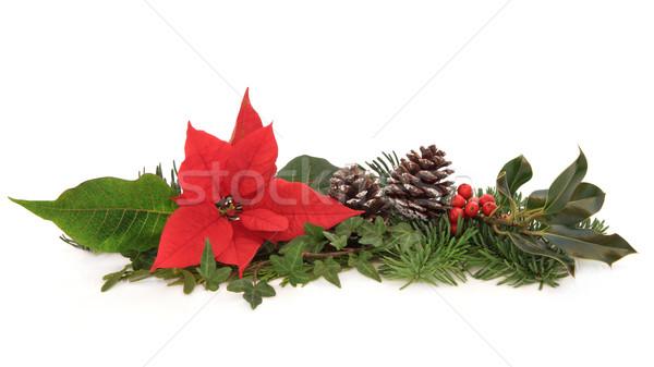 Tél állatvilág karácsony dekoráció virág borostyán Stock fotó © marilyna