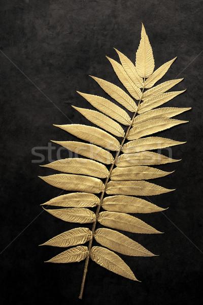 Leaf Beauty Stock photo © marilyna