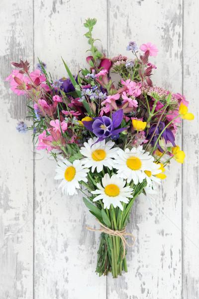 Kır çiçeği kır çiçeği çim yaz papatya hediye Stok fotoğraf © marilyna