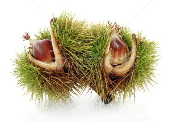 Beech Nuts Stock photo © marilyna
