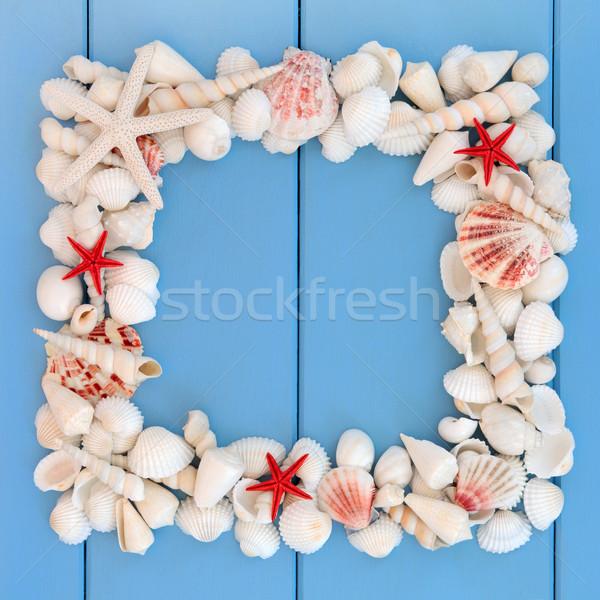 Seashell Frame Stock photo © marilyna