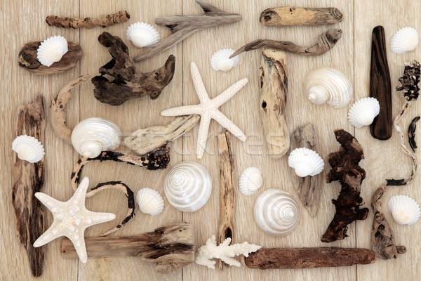自然の美 シェル 流木 抽象的な デザイン 古い ストックフォト © marilyna