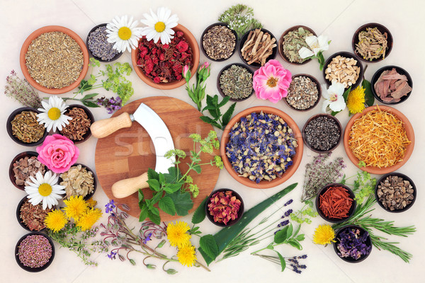 Natural Flower and Herb Medicine Stock photo © marilyna