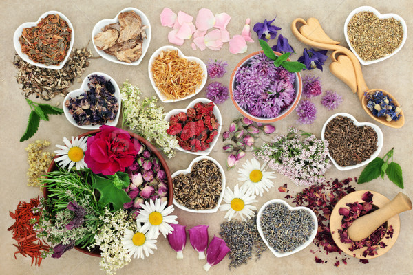 Medicinal Herbs and Flowers Stock photo © marilyna