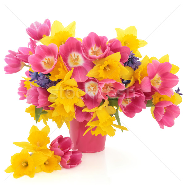 Spring Flower Beauty Stock photo © marilyna