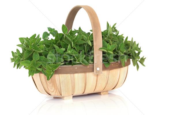 Origano erbe basket foglia rustico legno Foto d'archivio © marilyna