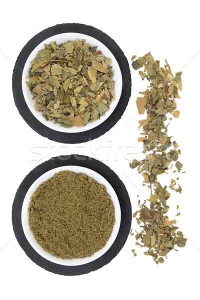 Ginkgo Biloba Herb Stock photo © marilyna